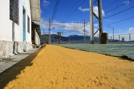 camino de baldosas amarillas
