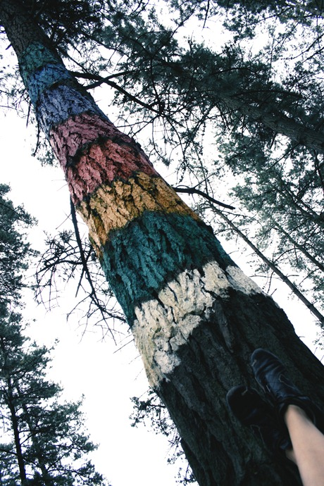 y los dias de lluvia caminare por arboles arcoiris copia