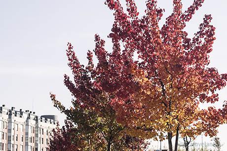 amvelandia_arbol tres colores_blog